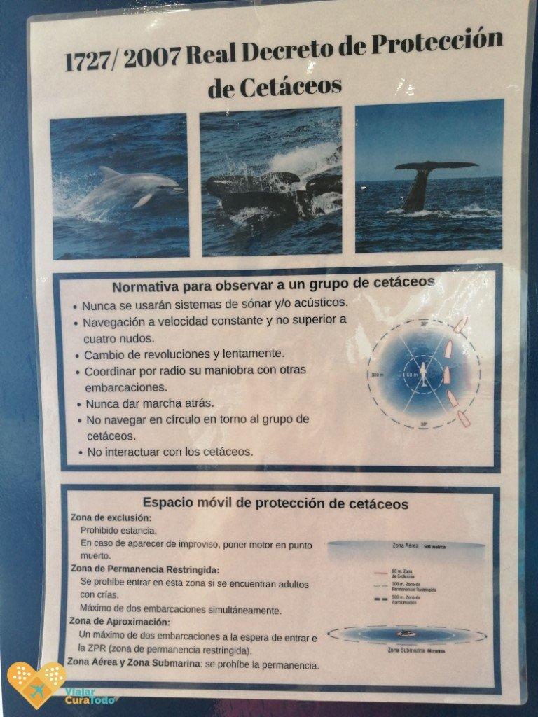 Avistamiento responsable de cetáceos
