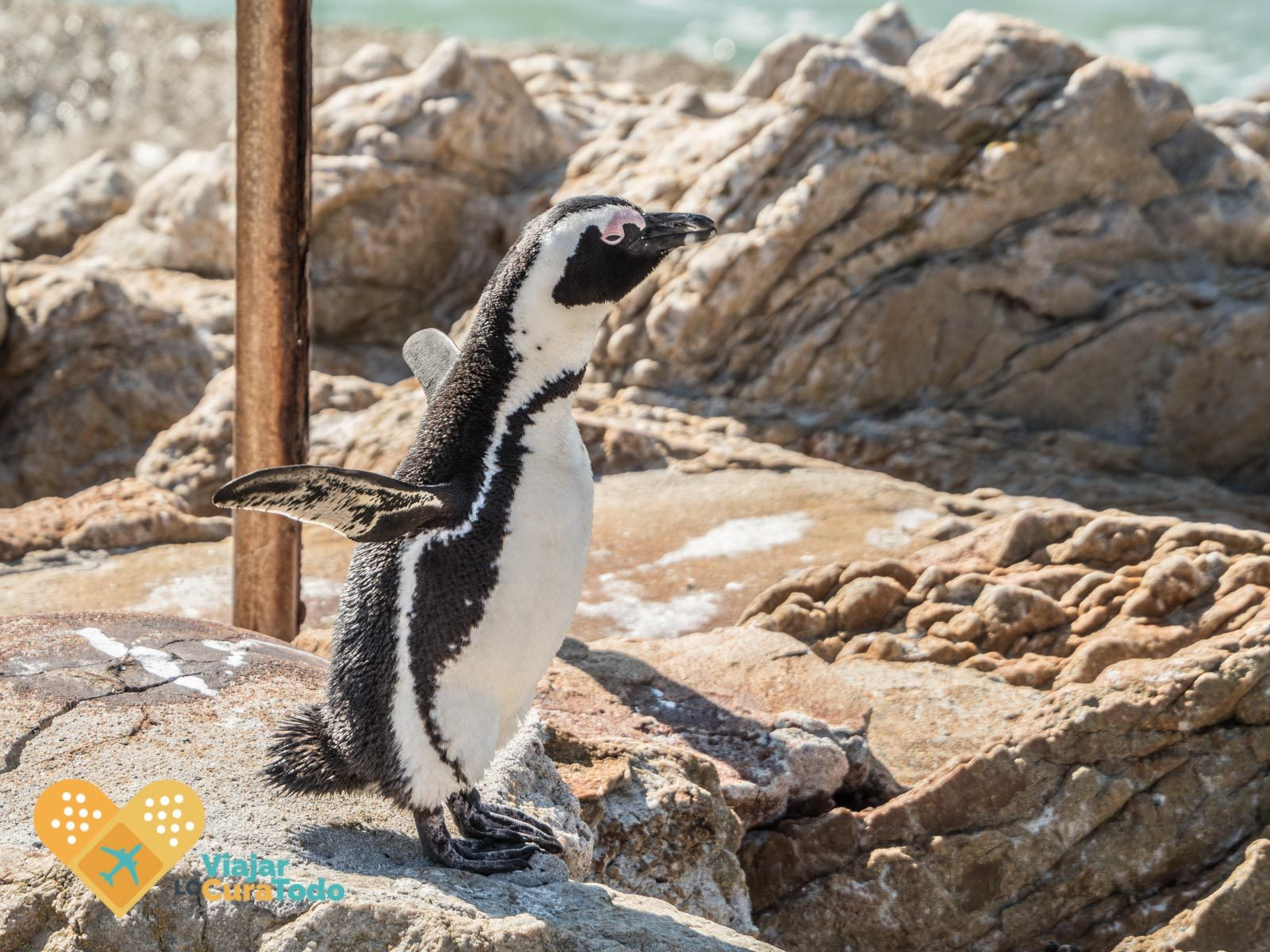 betty's bay penguins South Africa