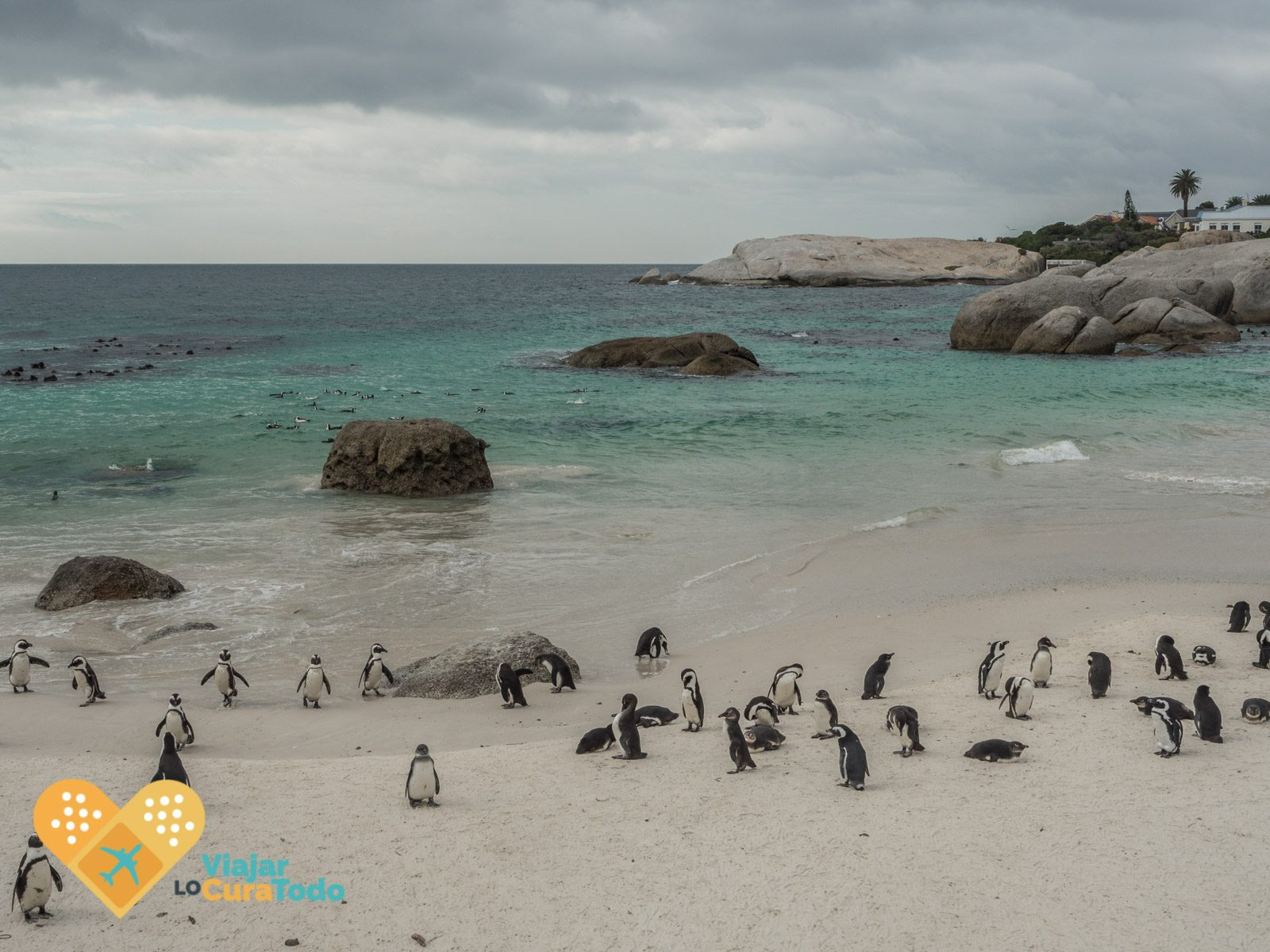 Boulder's beach penguins South africa