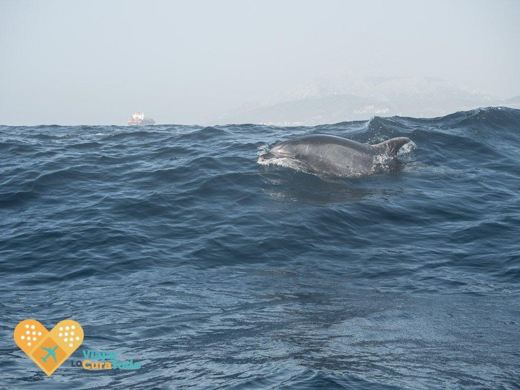 delfines estrecho de Gibraltar
