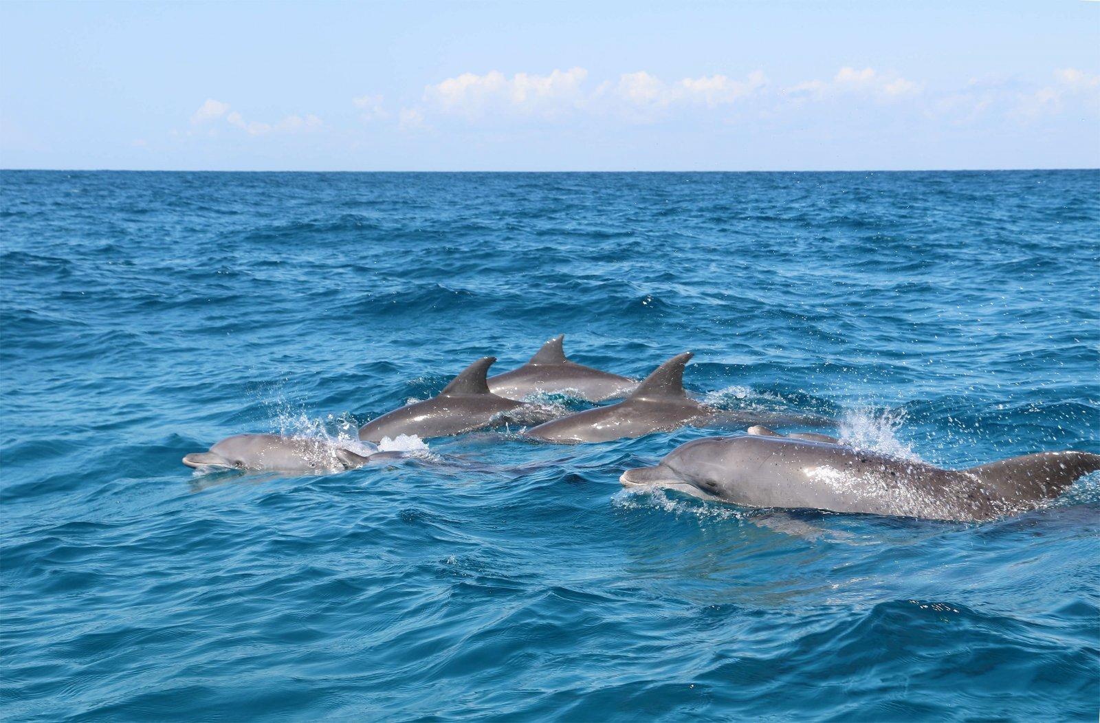 delfines libertad