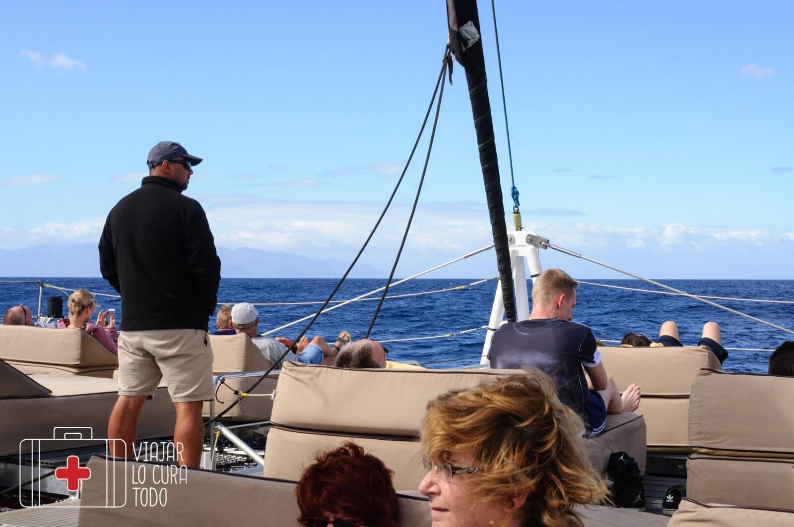 delfines en libertad en Tenerife
