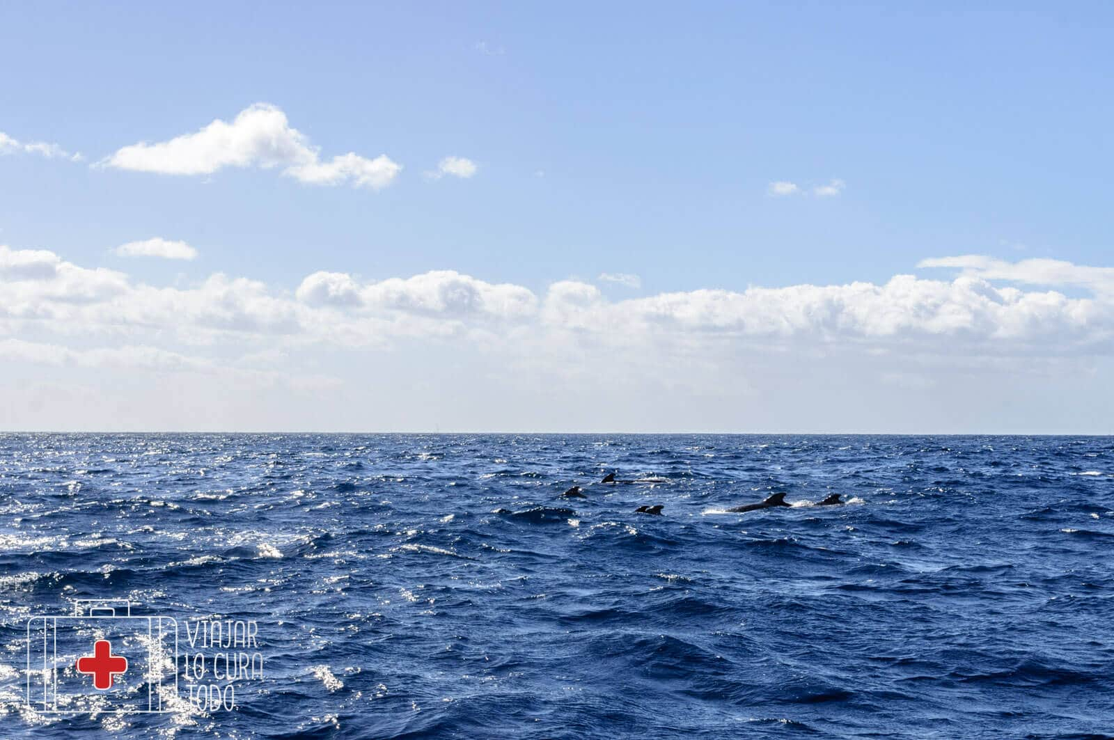 excursion ballenas tenerife (9)