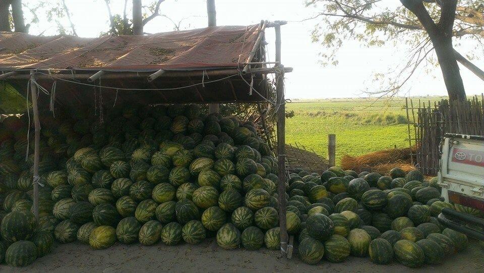 myanmar watermelon