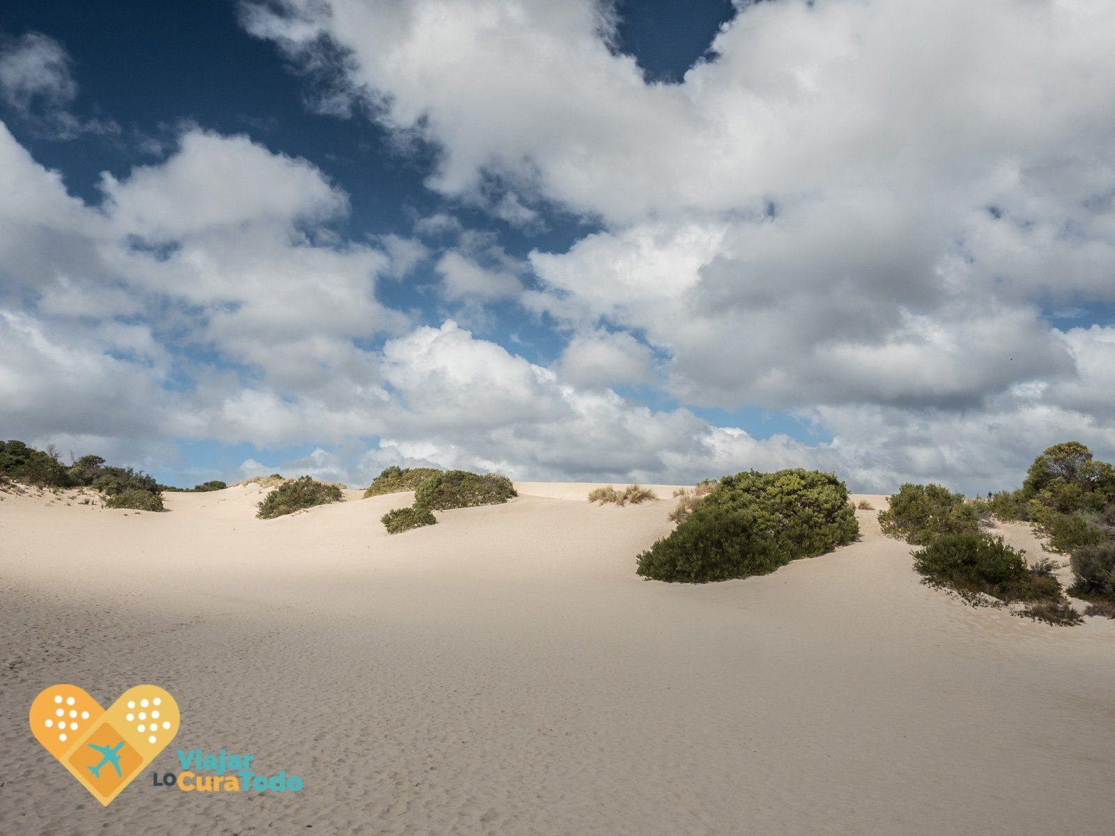 Kangaroo Island, un imprescindible en Australia