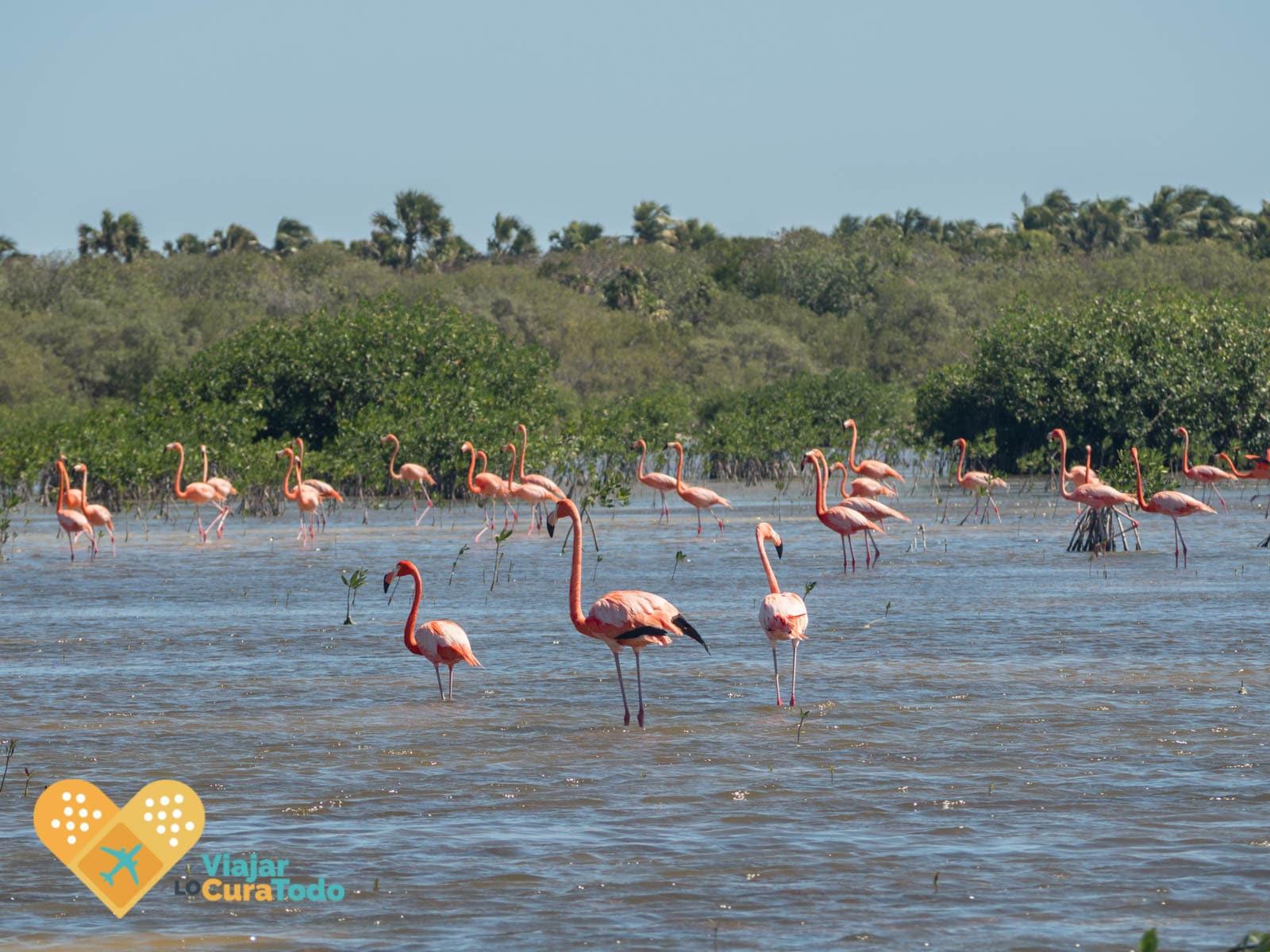 observación de flamencos en la laguna oviedo